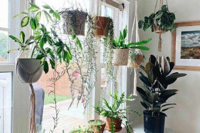 Vaso Suspenso: Modelos Para Você Criar um Jardim Particular